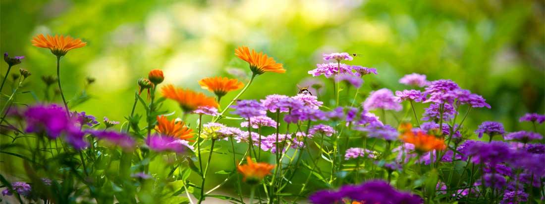 Nog veel meer bio tuinproducten!
